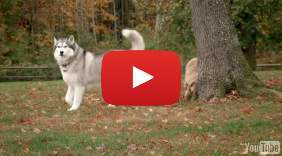 Worldcare Pet Transport